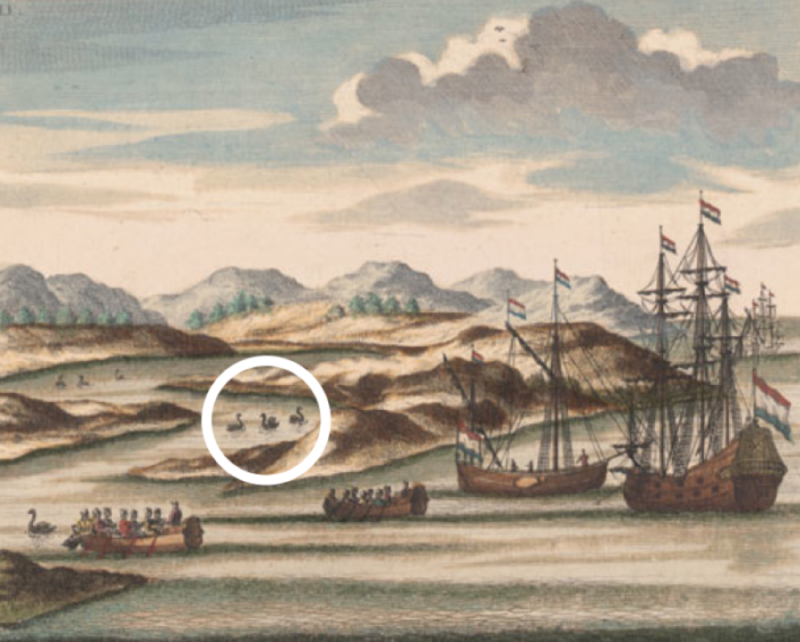 Explorers discovering the first Black Swans, previously considered impossible.